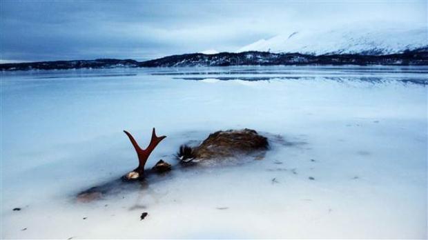 Norveç'te denizdeki balıklar dondu galerisi resim 5