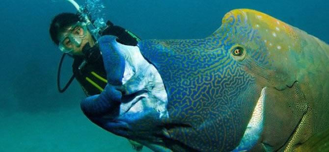 Dalgıç 130 kiloluk balığa yem oldu!.. galerisi resim 1