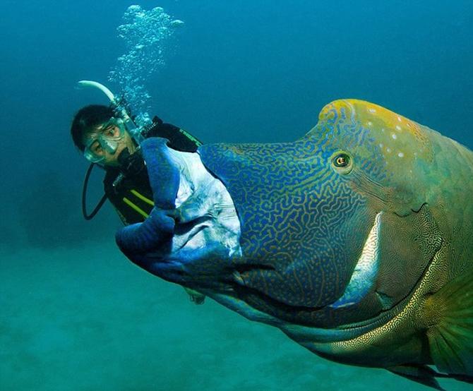 Dalgıç 130 kiloluk balığa yem oldu!.. galerisi resim 3
