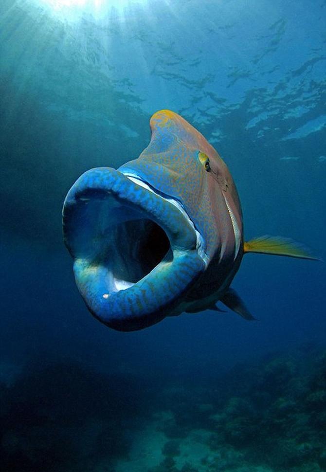 Dalgıç 130 kiloluk balığa yem oldu!.. galerisi resim 4