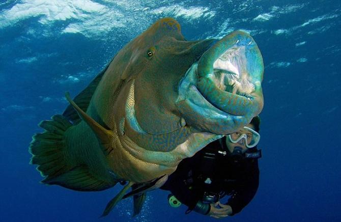 Dalgıç 130 kiloluk balığa yem oldu!.. galerisi resim 5
