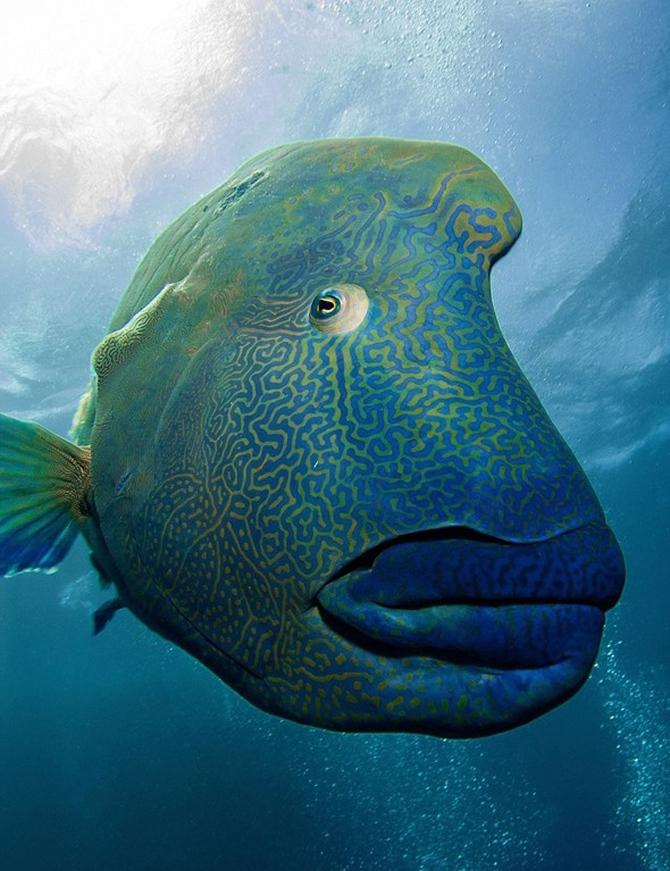 Dalgıç 130 kiloluk balığa yem oldu!.. galerisi resim 6