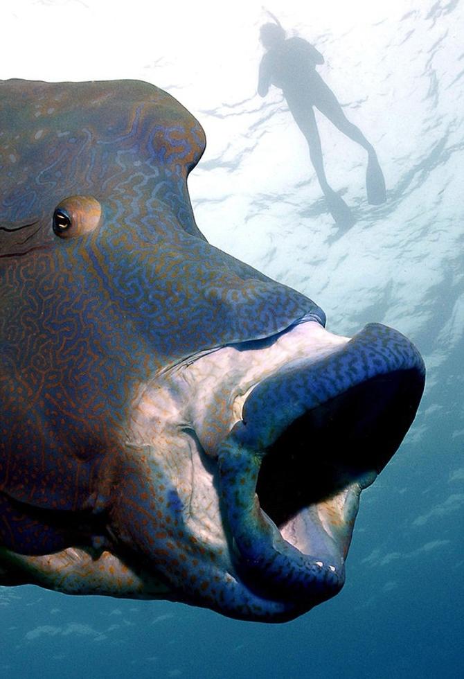 Dalgıç 130 kiloluk balığa yem oldu!.. galerisi resim 7