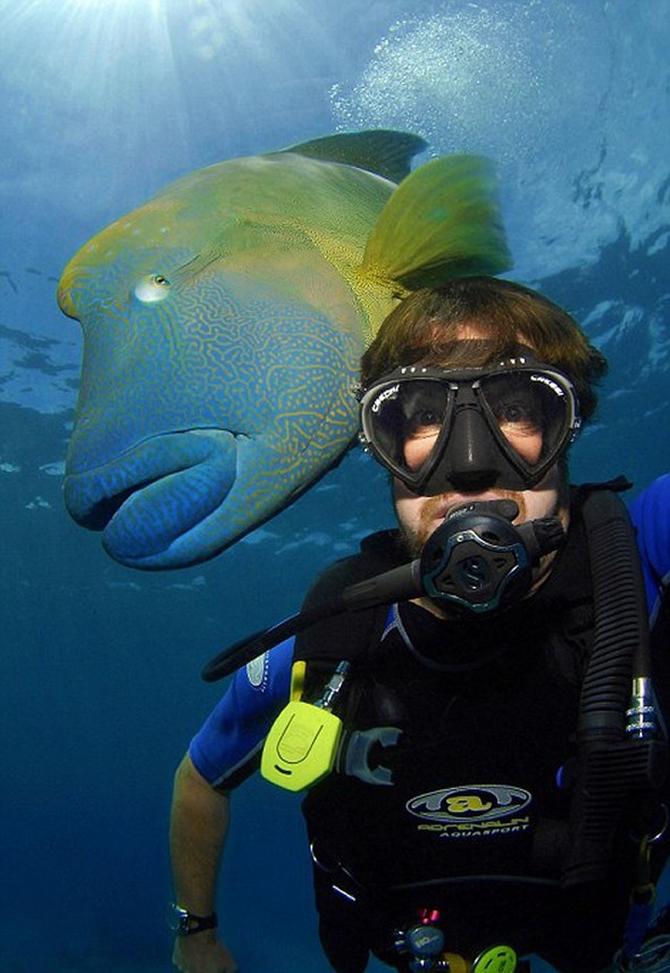Dalgıç 130 kiloluk balığa yem oldu!.. galerisi resim 8
