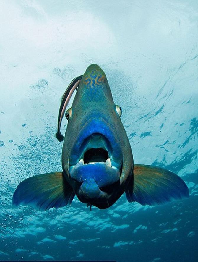 Dalgıç 130 kiloluk balığa yem oldu!.. galerisi resim 9