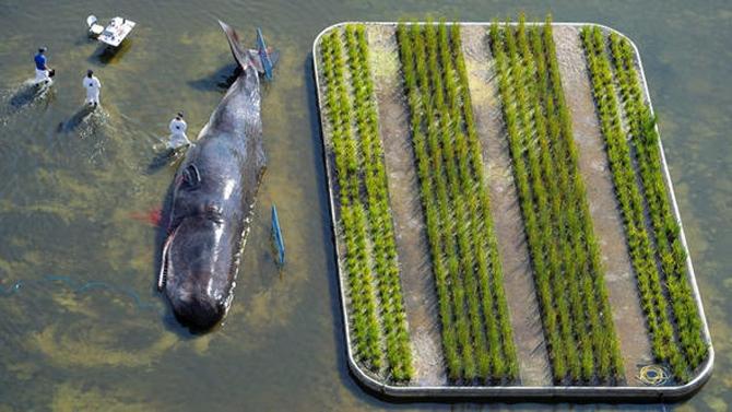 Nehir kenarındaki balina görenleri şaşırttı! galerisi resim 1