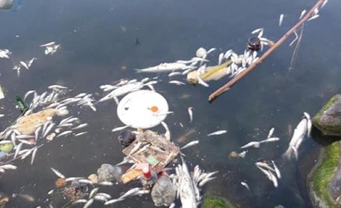 Küçükçekmece Gölü'ndeki balık ölümleri korkurttu galerisi resim 7