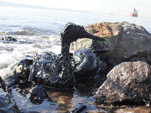 İzmit Körfezi'nde kara tanklarında denize sızan yakıtın dışında, gemi kaynaklı ürünlerde ortaya çıktı