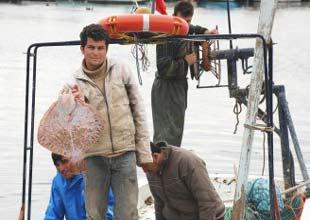 Sinop'ta kalkan avcılığı yüz güldürmüyor