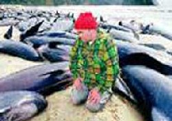 Balina ölüsü Mersin sahiline vurdu