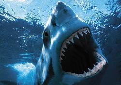 Köpekbalığı bir kadını parçaladı