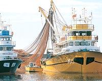 Belediye balıkçı barınağını istiyor