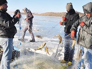 Baraj göllerinde 142 bin ton balık yetiştirildi