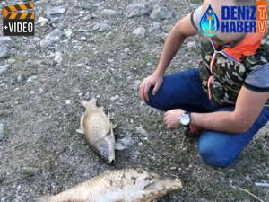 Germeçtepe Barajı'nda balıklar telef oldu