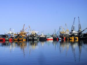 Su ürünleri genel av yasağı 15 Nisan'da başlıyor