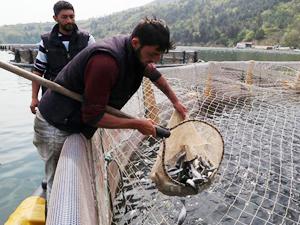 Balık tezgahlarına 'kültür' dopingi