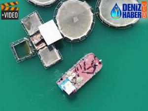 Fırat Nehri'nde yetiştirilen balıklar yurt dışına satılıyor