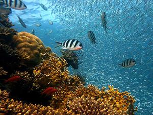 Bilim insanları 12 yeni deniz canlısı keşfetti