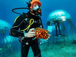İtalya'da deniz altında sebze ve meyve yetiştiriliyor