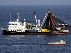 Gürcistan'da 15 Türk teknesi avlanıyor