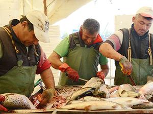 Ordu'dan Rusya ve Japonya'ya havuz balığı ihracatı