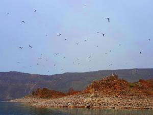 Nemrut Gölü'ndeki Martı Adası keşfedilmeyi bekliyor