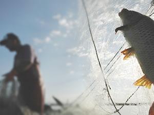 Kars Çayı'nda elektrikle balık avlayanlar yakalandı