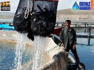 İç Anadolu'dan dünyaya balık ihraç ediyorlar
