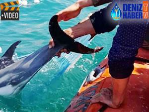 Denizde ağa takılan yunus, üç saatlik operasyonla kurtarıldı