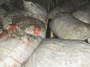 Van'da 4 ton 800 kilo inci kefali ele geçirildi