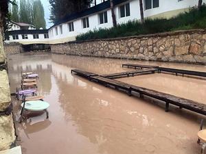 'Doktor balıklar' çamurlu sularda ölmeye başladı
