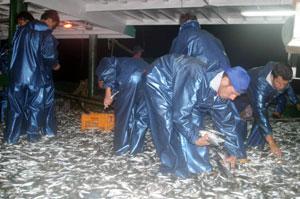 Karadeniz'de Balık Bereketli