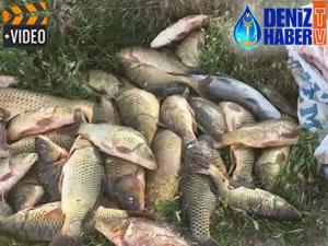 Adıyaman'da kaçak avlanan 250 kilo balık ele geçirildi