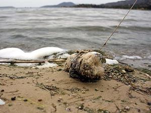 Bafa Gölü, kuraklık ve kirlilik tehdidi altında