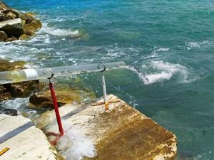 İzmir'de 98 bin çipura ve levrek denize bırakıldı