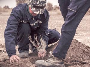 Özbekistan, Aral Gölü'nün yatağını ormana çevirmek istiyor