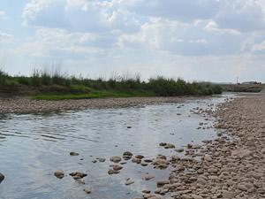 Garzan Çayı'nda su kesilince binlerce balık telef oldu