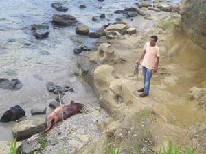 Telef olan yunus balığı Tekirdağ'a vurdu