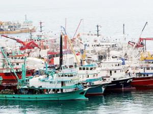 Sinop'ta 350 ticari tekne 'yeterlilik belgesi' alacak