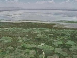 Akşehir Gölü, yağmur sularıyla beslendi