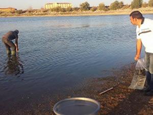 Kırşehir göletlerine 130 bin yavru balık bırakıldı