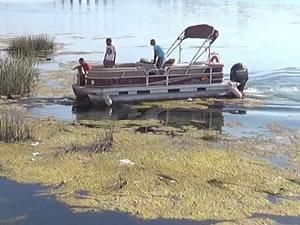 Fırat Nehri'ne düşen iki köpek, tekneyle kurtarıldı