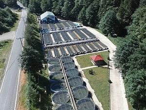 Altındere Alabalık Üretme İstasyonu, 3 milyon balık üretimi hedefliyor