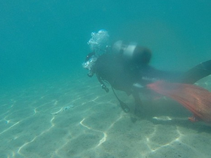 TURMEPA, 1 Temmuz'da deniz dibi temizliği yapıyor