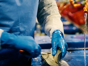 İlknak Aquaculture, yeni balık tesisinin açılışını yaptı