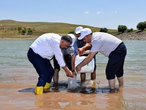 Muş'ta 85 bin yavru balık göletlere bırakıldı