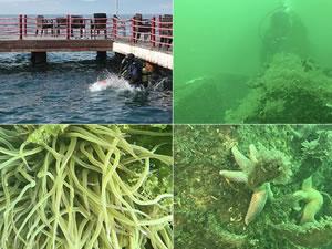İzmit Körfezi'ndeki batıklar dalgıçlardan ilgi görüyor