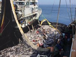 Senegal-Moritanya arasında balıkçılık anlaşması imzalandı