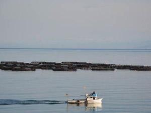 Kafes balıkçılığı Ordu'ya yılda 40 milyon kazandırıyor
