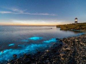 Anglesey Adası'nda sahil mavi renge büründü